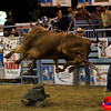 Bull Riding Events : 1 gallery with 46 photos